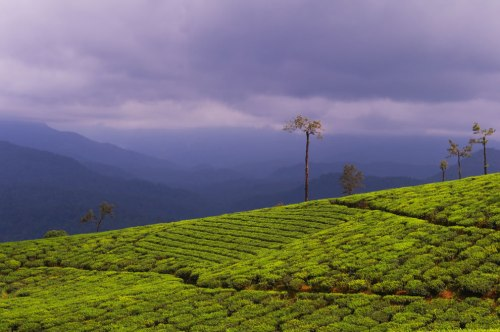 Scenic-View-of-Valparai