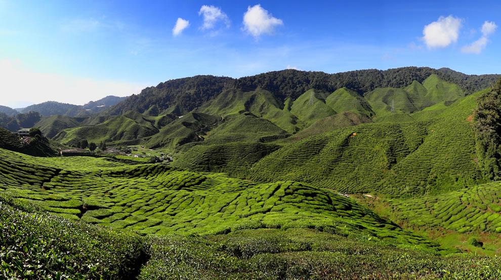 The-Bharat-Tea-Plantation-near-Tanah-Rata-in-the-Cameron-Highlands-Malaysia