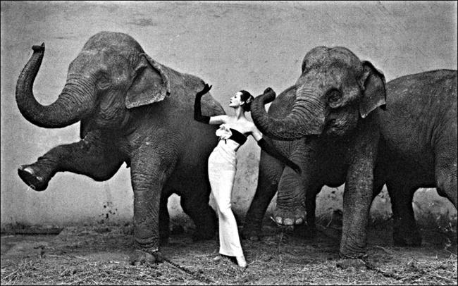 avedon_Dovina_with_Elephants2