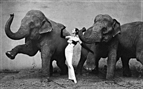 avedon_Dovina_with_Elephants2