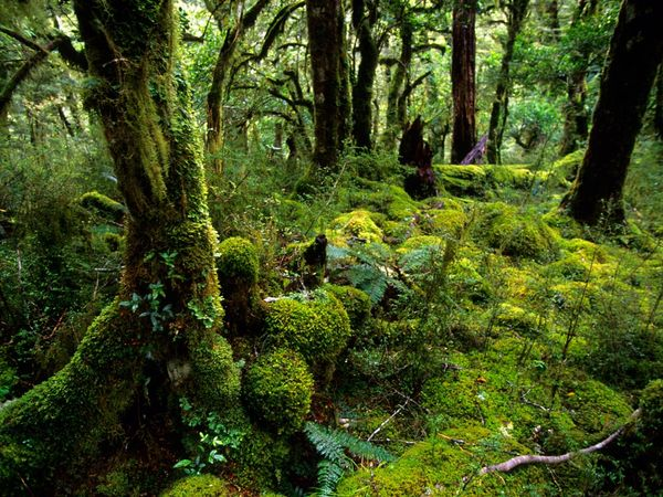 fiordland-national-park_9106_600x450