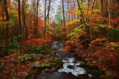 Autumn-in-Tennessee-Fall-Creek-Great-Smoky-Mountains