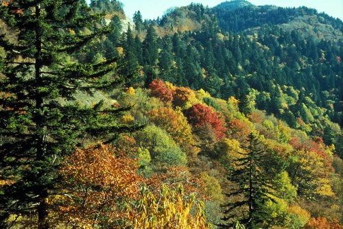 Autumn-leaf-colors-at-Newfound-Gap-Great-Smoky-Mountains-National