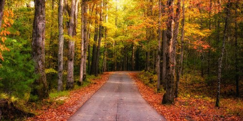 Fall-Road-Glow-Cades-Cove-Great-Smoky-Mountains-National-Park