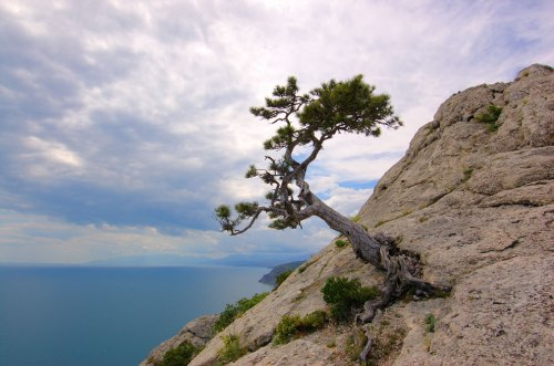 Black-Sea-and-tree-growing-on-the-rocks-of-the-Crimean-Mountains