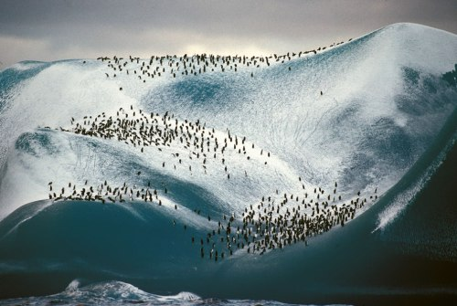 Adelie-penguins-on-iceberg