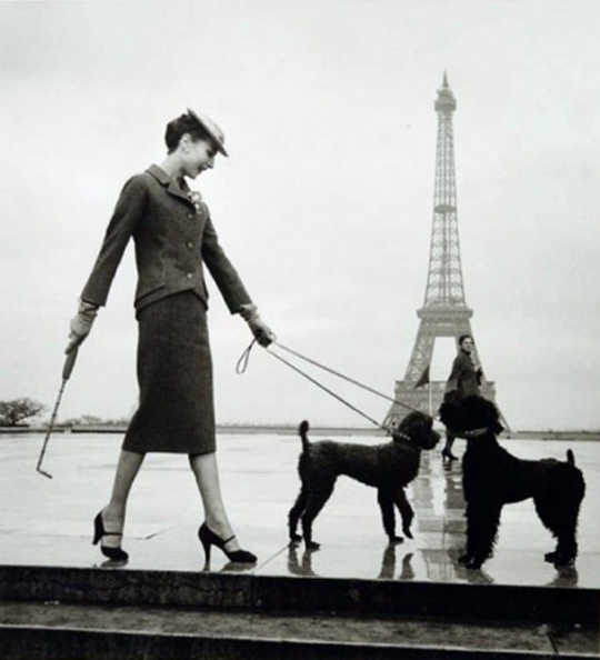 louise dahl wolfe paris dogs