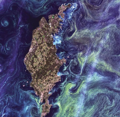 Phytoplankton-Bloom-massive-congregations-of-greenish-phytoplankton-swirl-in-the-dark-water-around-Gotland-a-Swedish-island-in-the-Baltic-Sea