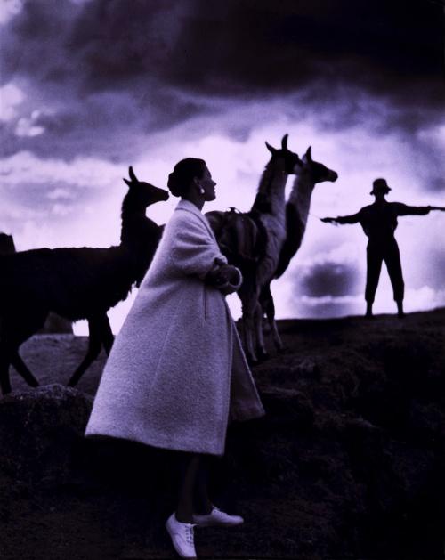 Toni_Frissell,_Llamas,_Cusco,_Peru,_1952