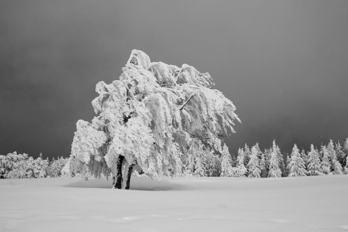 cold-as-ice-Black-Forest