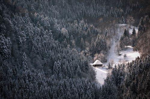 Deep-in-the-Black-Forest