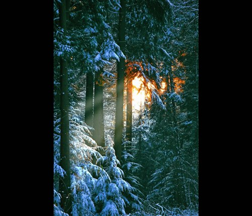 Sonian-Forest-close-to-Brussels-Comfortably-nestled-in-the-Forest-Snow