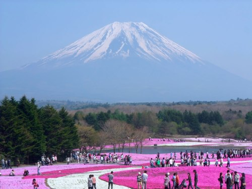 Spring-in-Japan-flowers-and-Mount-Fugi
