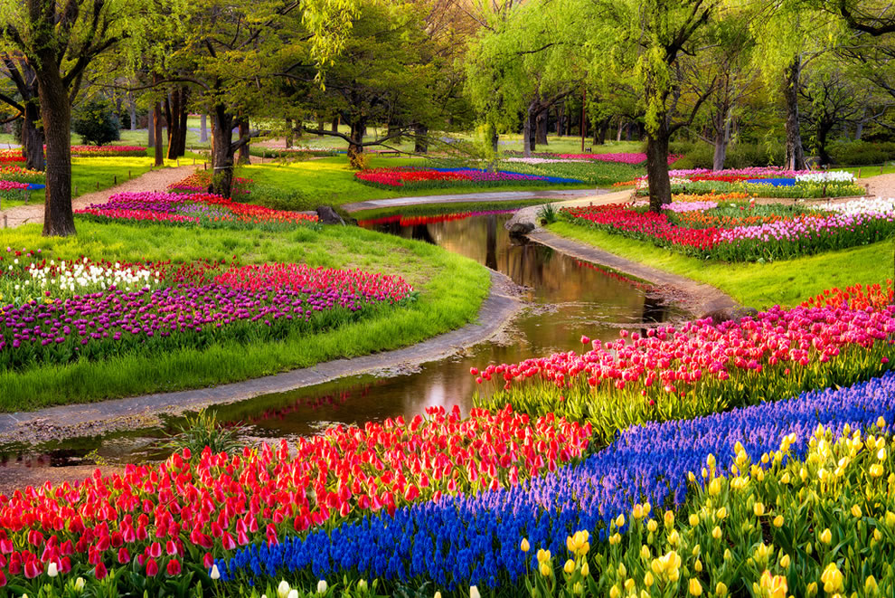 Tulips-at-Serpent-Garden-in-Japan-