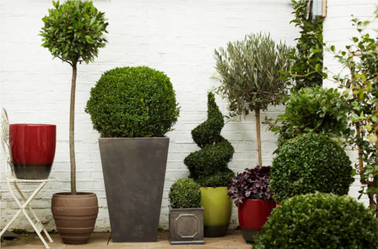 Outdoor_plants_and_pots