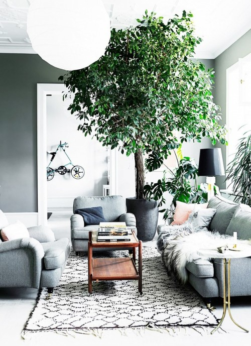 Fresh-Interior-Designs-Fit-For-Plant-Enthusiasts-homesthetics-4