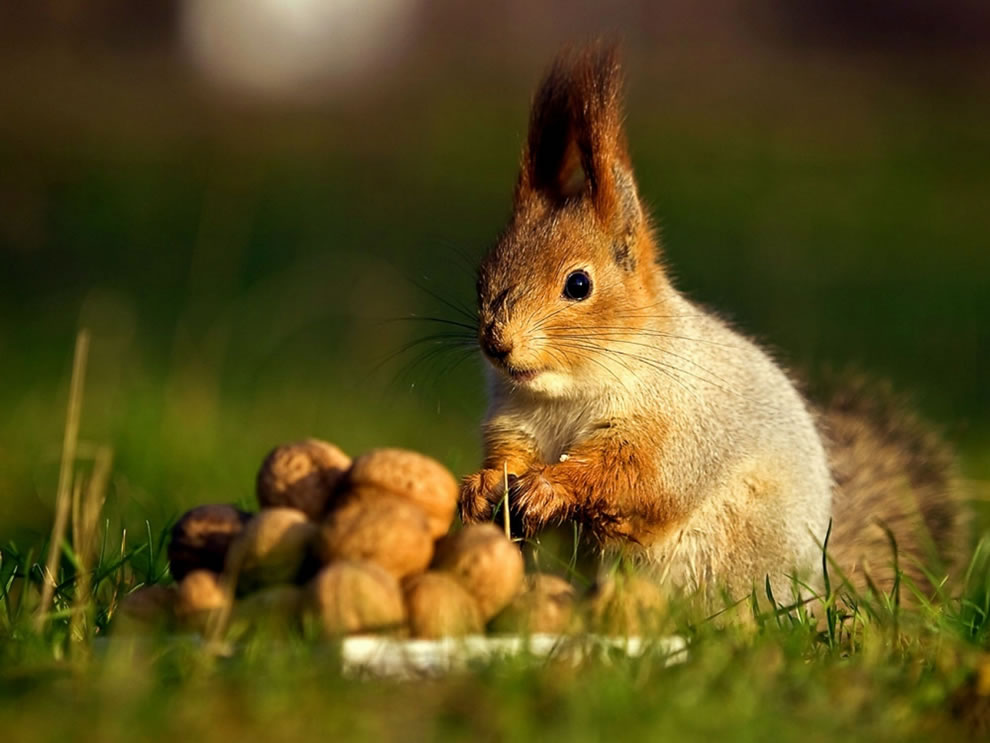 hoarder-squirrel