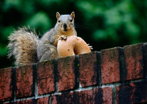 special-treat-since-a-squirrel-cannot-live-on-nuts-alone