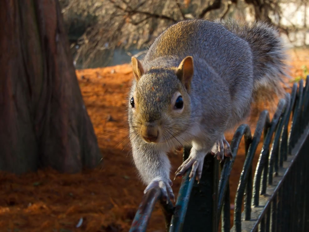 squirrel-walking-the-line