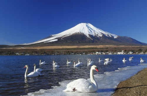 mount-fuji-and-the-swan-at-lake-kawaguchi-japan-1600x1050