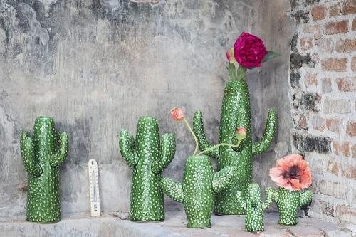foto-cactus-2-
