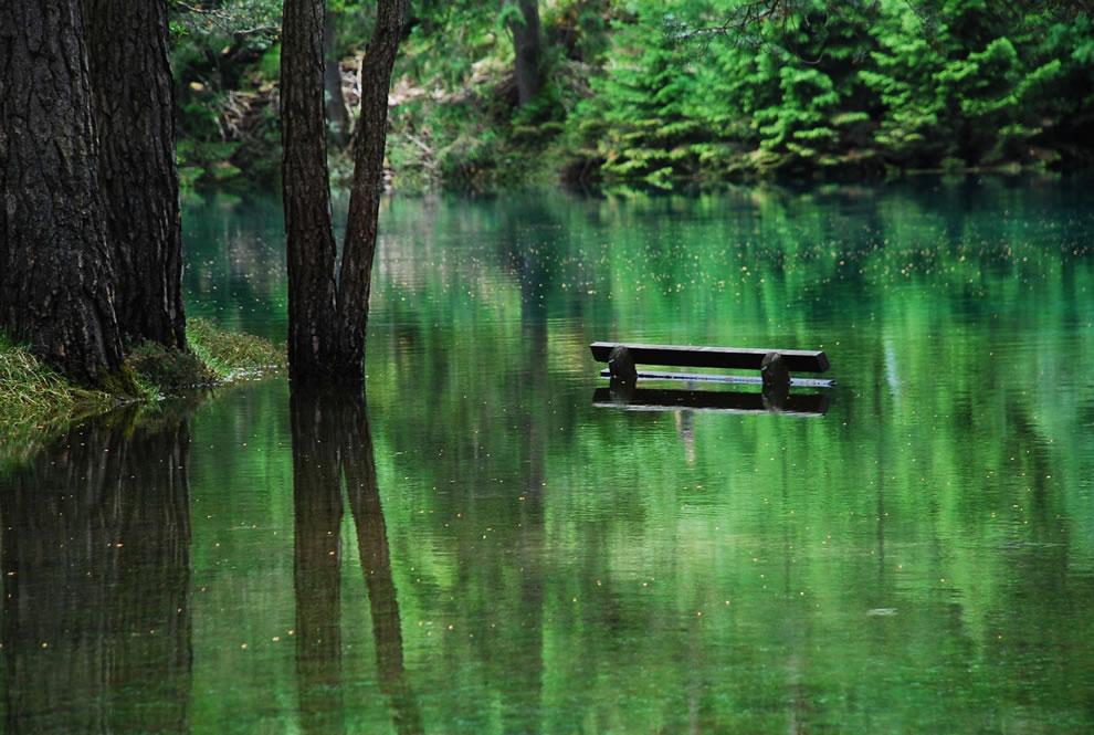Green-Lake-bank