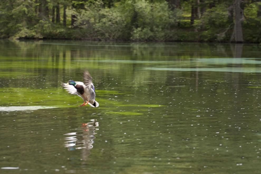 Wildlife-at-Green-Lake