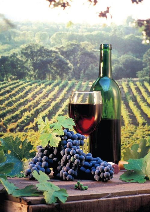 5a89ef3e86b4e9d579094a7bb57ff504--wine-vineyards-wine-art