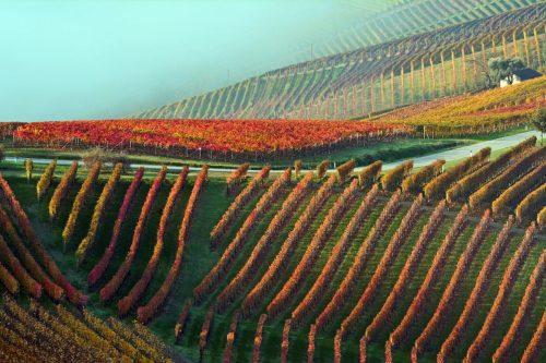 langhe-autunno-1300x867